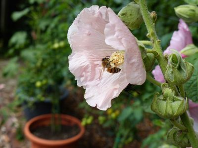 Gartenthemen 5 Ein Garten Fur Bienen Hummeln Allodien German