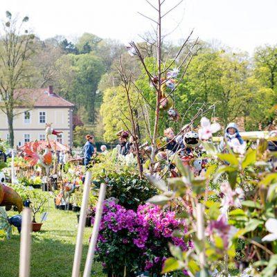 Im Vordergrund Gartenpflanzen in Töpfen, im Hintergrund die Silhouette des Anwesens Hardenberg