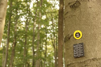 Das Foto zeigt den Ausschnitt eines Baumstamms, an dem sich die Nummer des Baumes befindet sowie ein Namensschild mit den dort unter dem Baum begrabenen Personen