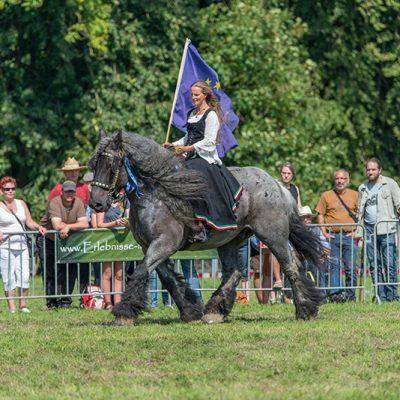 Ein Kaltblutpferd mit Reiterin präsentiert zur Messe PferdeStark